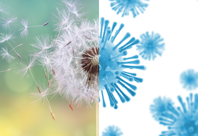 image of half screen a dandelion blowing and half screen of covid-19 virus